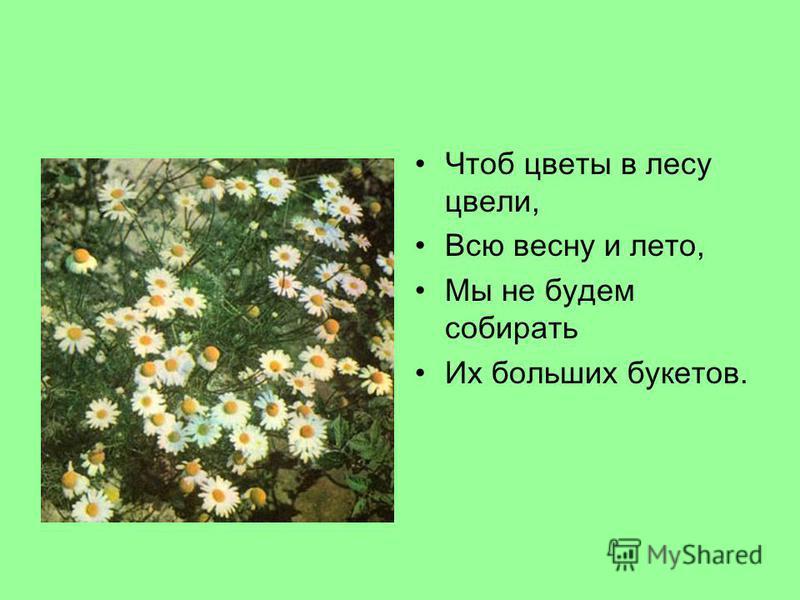Чтоб цветы в лесу цвели, Всю весну и лето, Мы не будем собирать Их больших букетов.