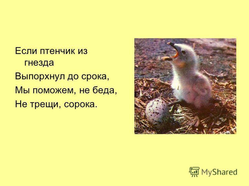Если птенчик из гнезда Выпорхнул до срока, Мы поможем, не беда, Не трещи, сорока.