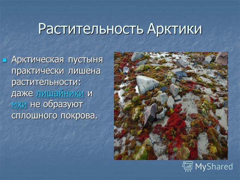 Растительность Арктики Арктическая пустыня практически лишена растительности: даже лишайники и мхи не образуют сплошного покрова. Арктическая пустыня практически лишена растительности: даже лишайники и мхи не образуют сплошного покрова.лишайники мхи