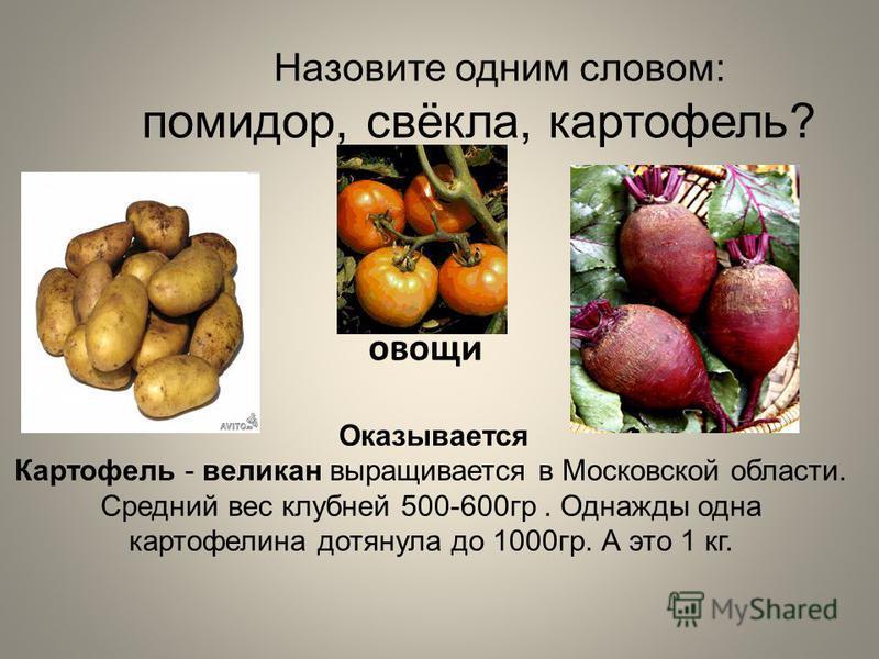 Оказывается Картофель - великан выращивается в Московской области. Средний вес клубней 500-600 гр. Однажды одна картофелина дотянула до 1000 гр. А это 1 кг. Назовите одним словом: помидор, свёкла, картофель? овощи
