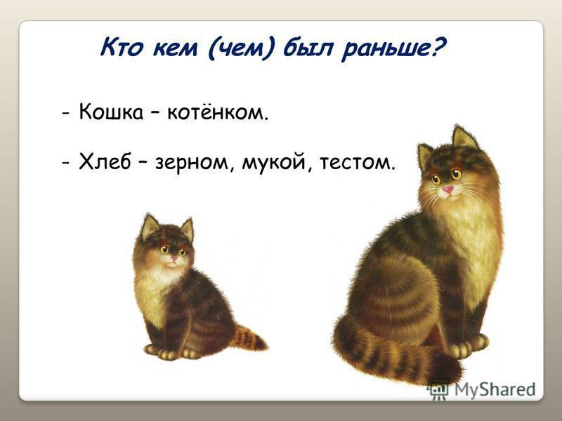 Кто кем (чем) был раньше? -Кошка – котёнком. -Хлеб – зерном, мукой, тестом.