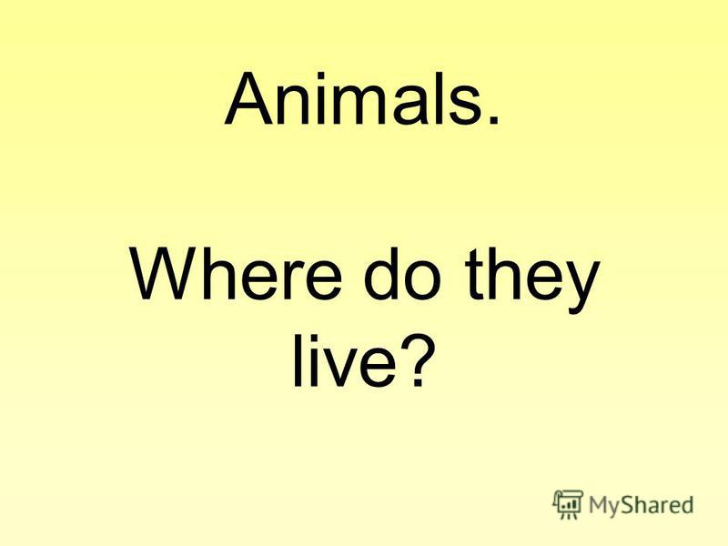 Animals. Where do they live?