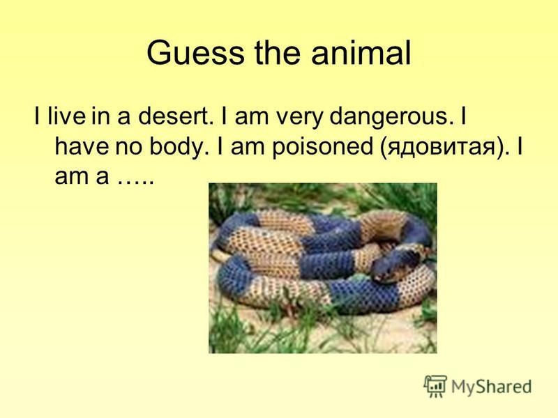 Guess the animal I live in a desert. I am very dangerous. I have no body. I am poisoned (ядовитая). I am a …..