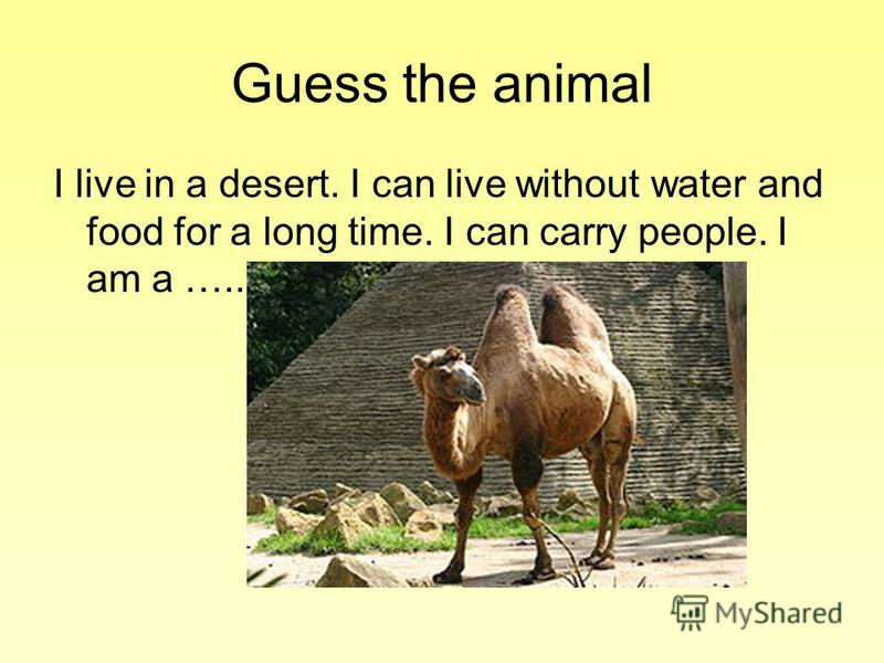 Guess the animal I live in a desert. I can live without water and food for a long time. I can carry people. I am a …..