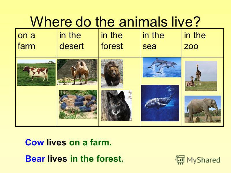 Where do the animals live? on a farm in the desert in the forest in the sea in the zoo Cow lives on a farm. Bear lives in the forest.