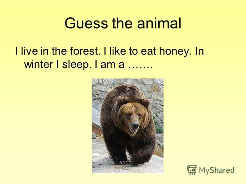 Guess the animal I live in the forest. I like to eat honey. In winter I sleep. I am a …….