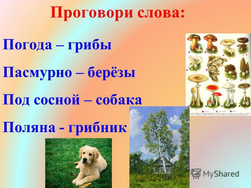 Погода – грибы Пасмурно – берёзы Под сосной – собака Поляна - грибник Проговори слова:
