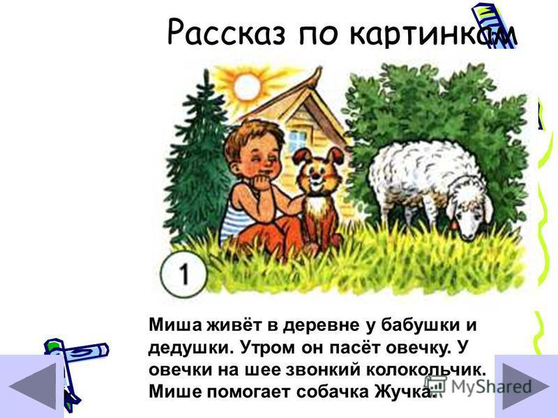 Рассказ по картинкам Миша живёт в деревне у бабушки и дедушки. Утром он пасёт овечку. У овечки на шее звонкий колокольчик. Мише помогает собачка Жучка.