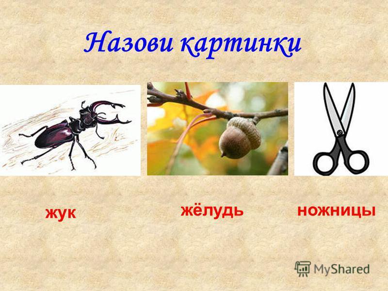 Назови картинки жук жёлудь ножницы