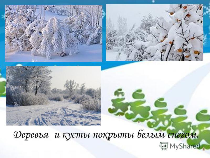 Деревья и кусты покрыты белым снегом.