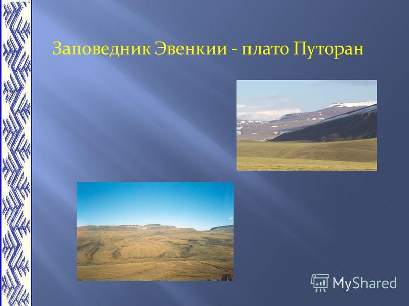 Заповедник Эвенкии - плато Путоран