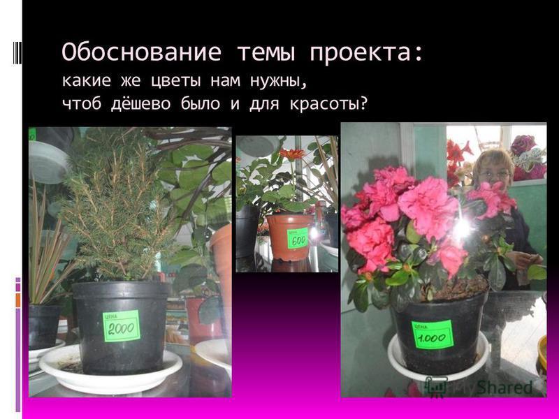 Обоснование темы проекта: какие же цветы нам нужны, чтоб дёшево было и для красоты?