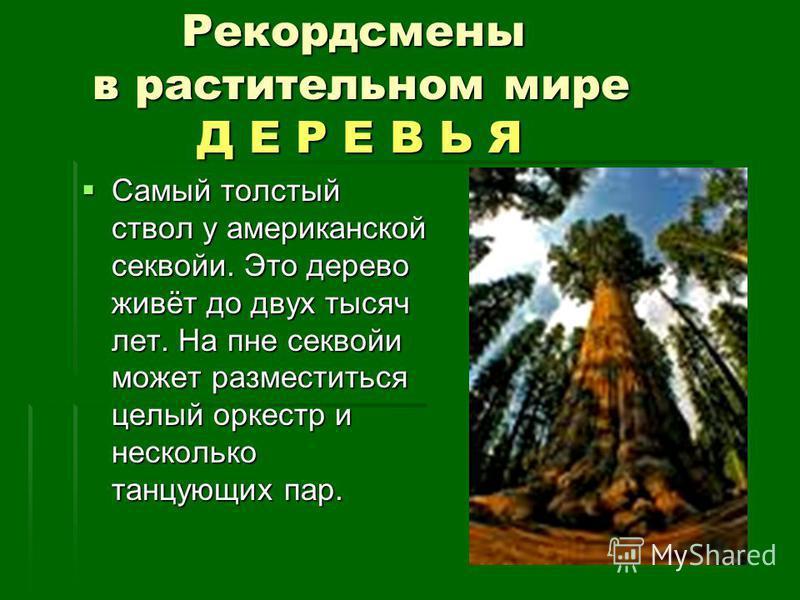 Рекордсмены в растительном мире Д Е Р Е В Ь Я Рекордсмены в растительном мире Д Е Р Е В Ь Я Самый толстый ствол у американской секвойи. Это дерево живёт до двух тысяч лет. На пне секвойи может разместиться целый оркестр и несколько танцующих пар. Сам