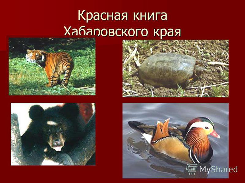 Красная книга Хабаровского края