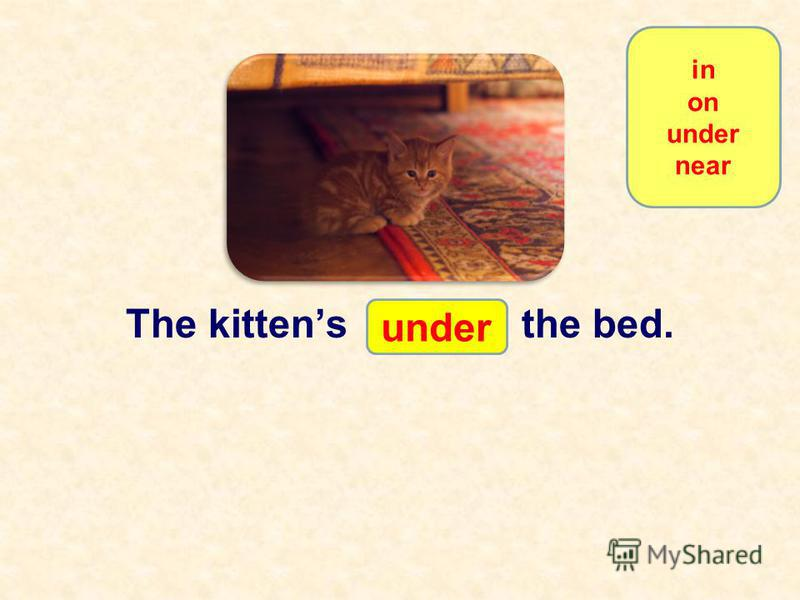 The kittens … the book. under in on under near