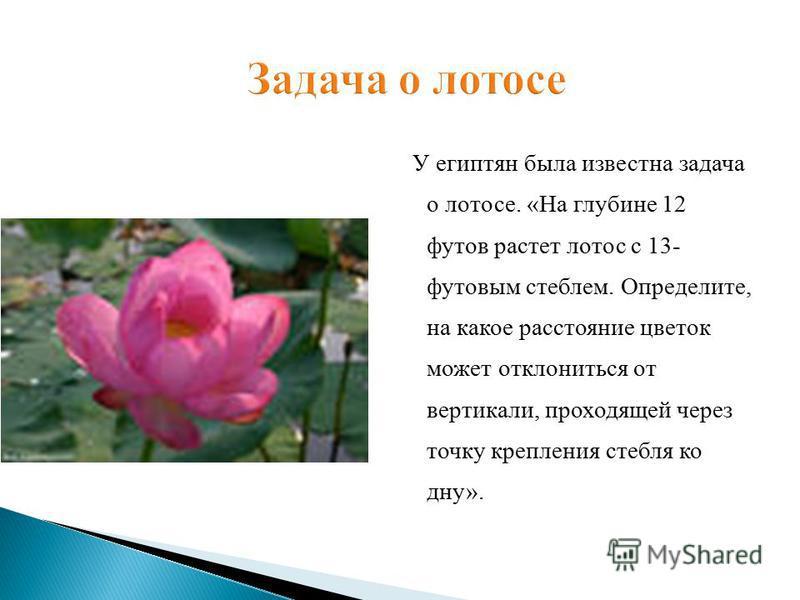 У египтян была известна задача о лотосе. «На глубине 12 футов растет лотос с 13- футовым стеблем. Определите, на какое расстояние цветок может отклониться от вертикали, проходящей через точку крепления стебля ко дну».