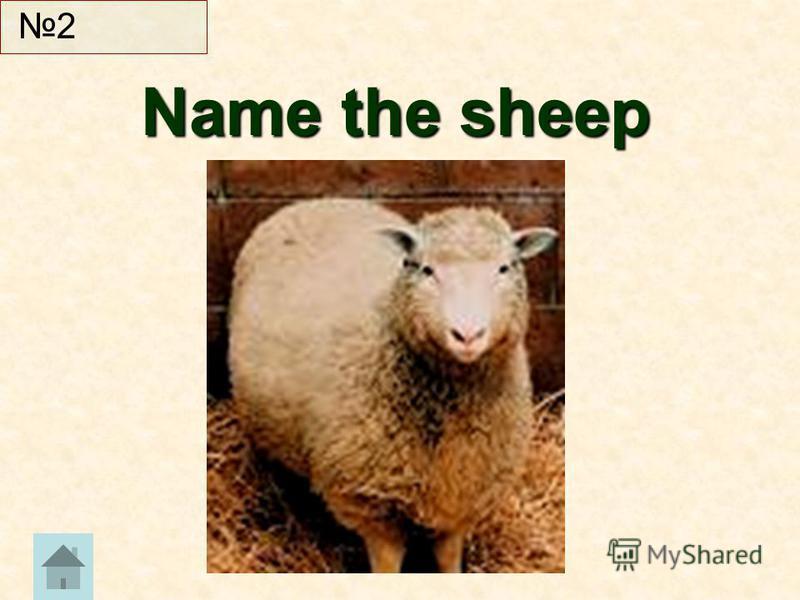 Name the sheep Name the sheep 2
