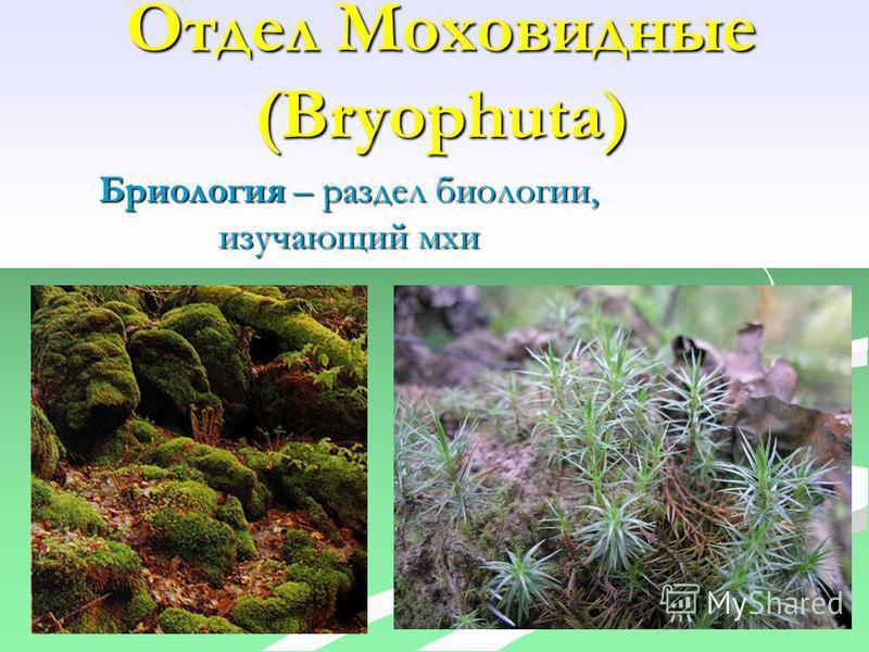 Отдел Моховидные (Bryophuta) Бриология – раздел биологии, изучающий мхи