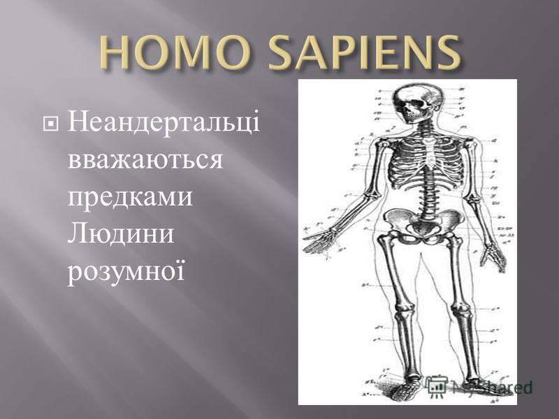 Неандертальці вважаються предками Людини розумної