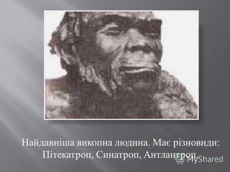 Найдавніша викопна людина. Має різновиди : Пітекатроп, Синатроп, Антлантроп.