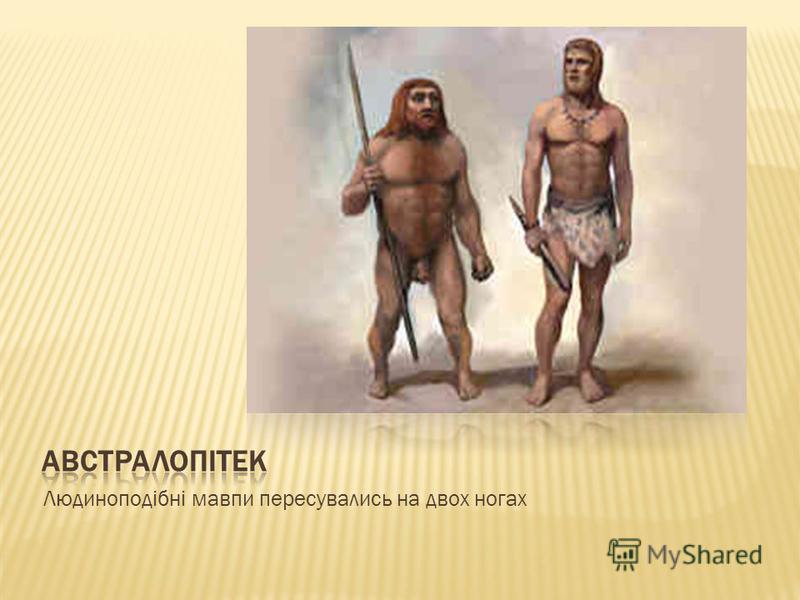 Людиноподібні мавпи пересувались на двох ногах