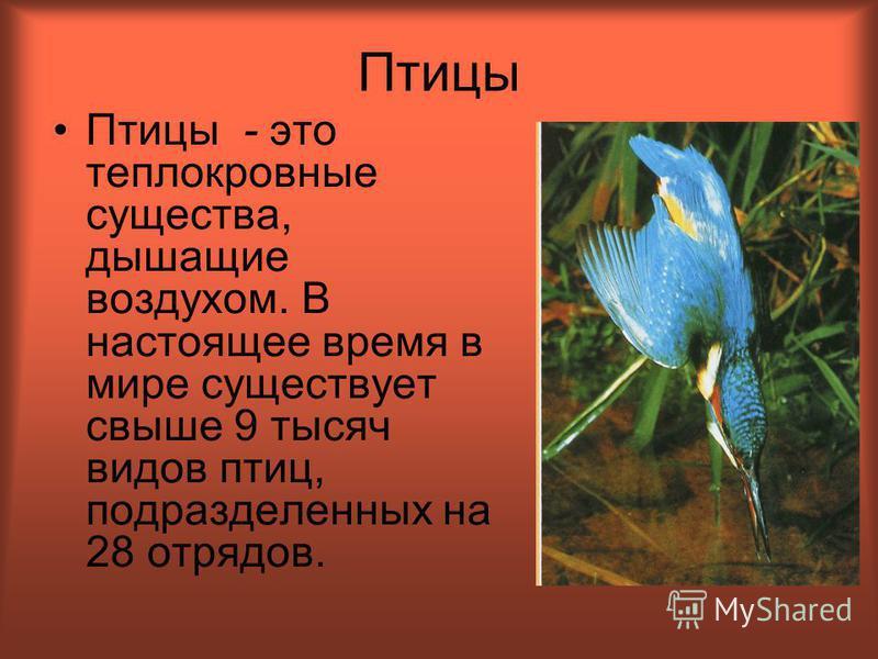Птицы Птицы - это теплокровные существа, дышащие воздухом. В настоящее время в мире существует свыше 9 тысяч видов птиц, подразделенных на 28 отрядов.