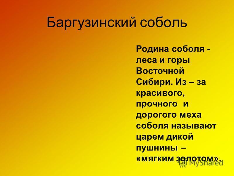 Баргузинский соболь Родина соболя - леса и горы Восточной Сибири. Из – за красивого, прочного и дорогого меха соболя называют царем дикой пушнины – «мягким золотом».