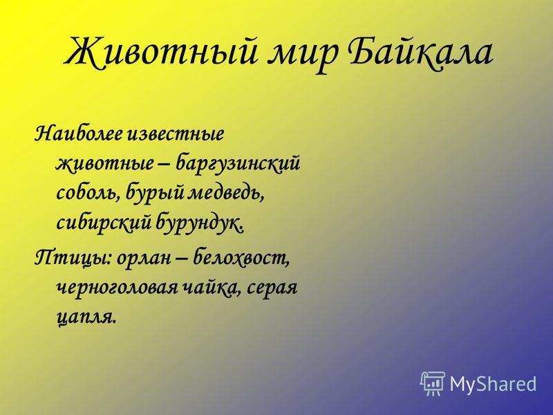 Животный мир Байкала Наиболее известные животные – баргузинский соболь, бурый медведь, сибирский бурундук. Птицы: орлан – белохвост, черноголовая чайка, серая цапля.