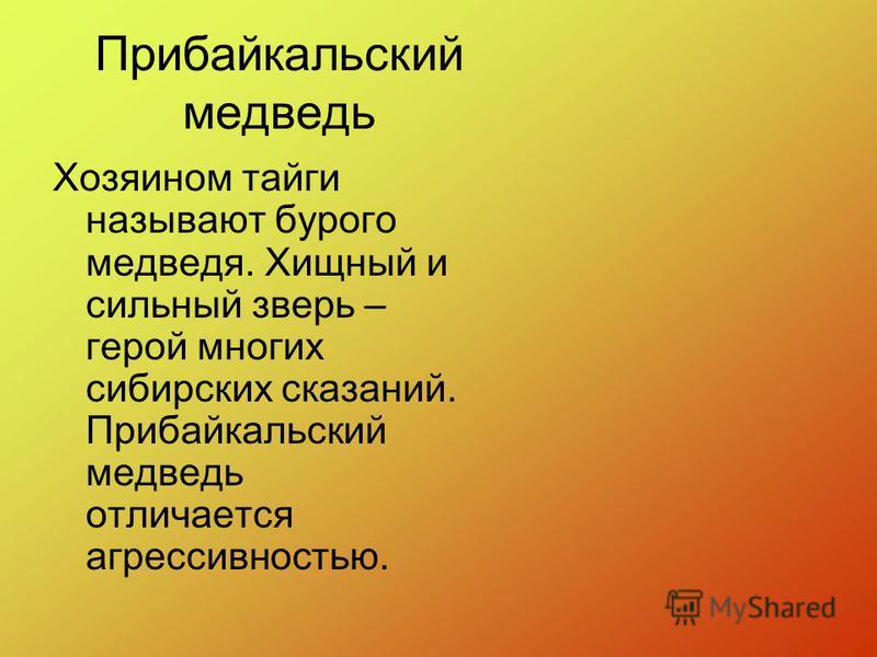 Прибайкальский медведь Хозяином тайги называют бурого медведя. Хищный и сильный зверь – герой многих сибирских сказаний. Прибайкальский медведь отличается агрессивностью.