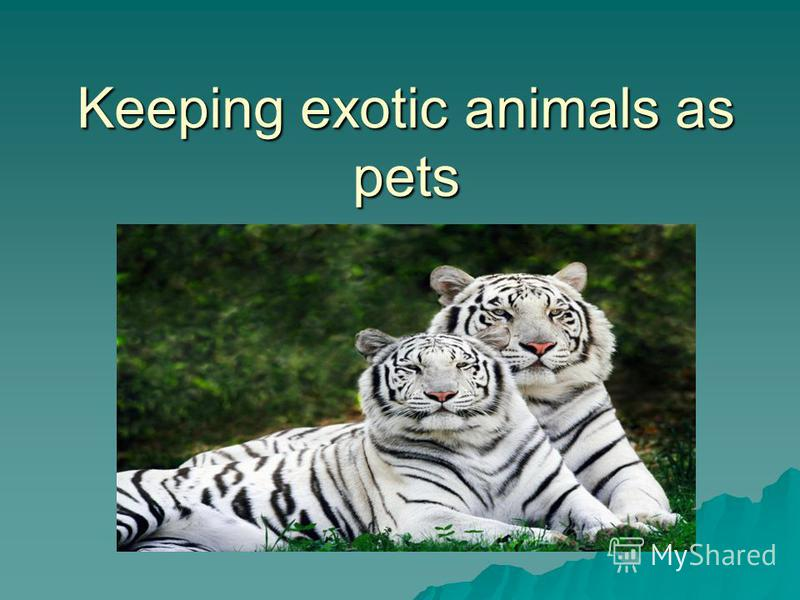 keeping animals as pets essay In this essay i will discuss contemporary issues of animals such as  some  people firmly believe that keeping animals in zoos is cruel towards them  in  additional to these disadvantages future owners of pets should take.