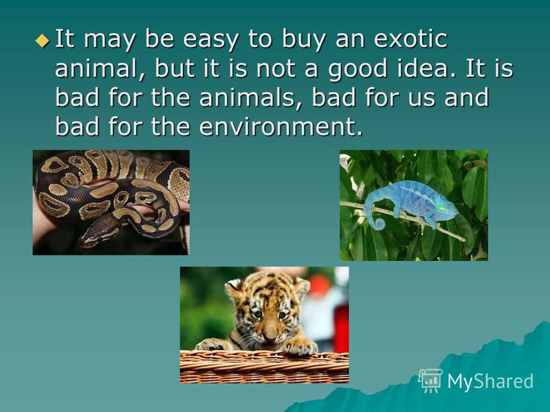 exotic animals as pets essay Source:livescience should wild animals be kept as pets article on the national humane society website advantages to owing an exotic pet certain exotics, like reptiles and amphibians, are not a problem for people who suffer from allergies.