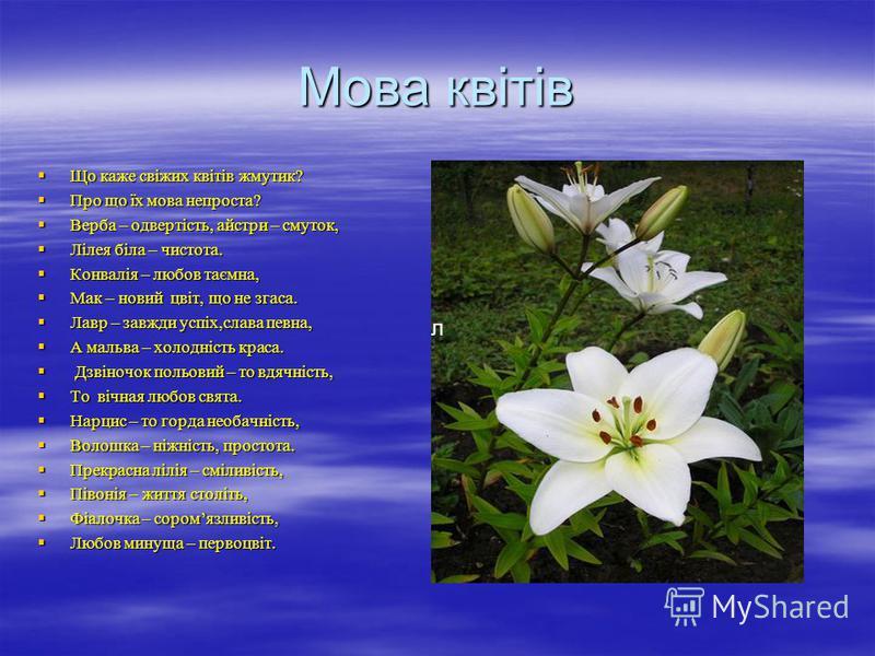 Мова квітів Що каже свіжих квітів жмутик? Що каже свіжих квітів жмутик? Про що їх мова непроста? Про що їх мова непроста? Верба – одвертість, айстри – смуток, Верба – одвертість, айстри – смуток, Лілея біла – чистота. Лілея біла – чистота. Конвалія –