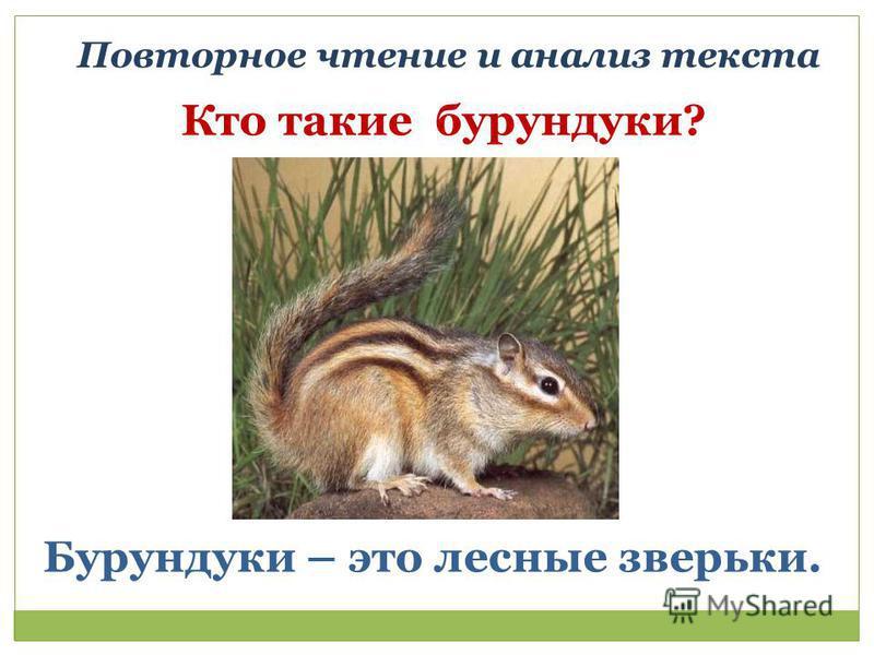 Повторное чтение и анализ текста Кто такие бурундуки? Бурундуки – это лесные зверьки.