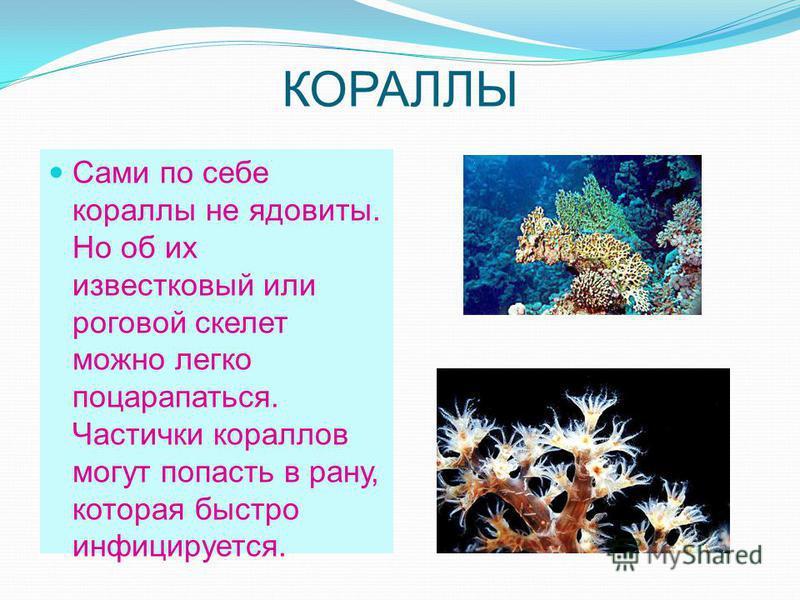 КОРАЛЛЫ Сами по себе кораллы не ядовиты. Но об их известковый или роговой скелет можно легко поцарапаться. Частички кораллов могут попасть в рану, которая быстро инфицируется.
