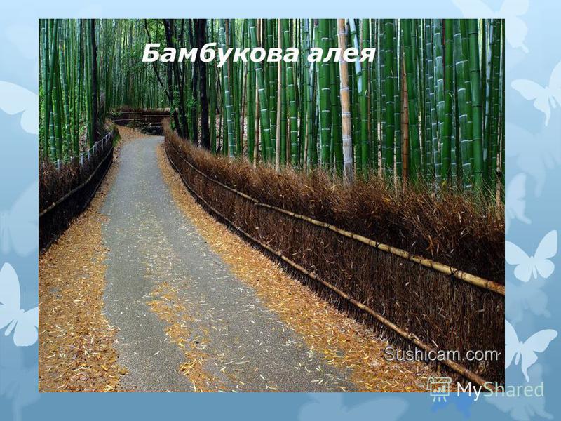 Бамбукова алея