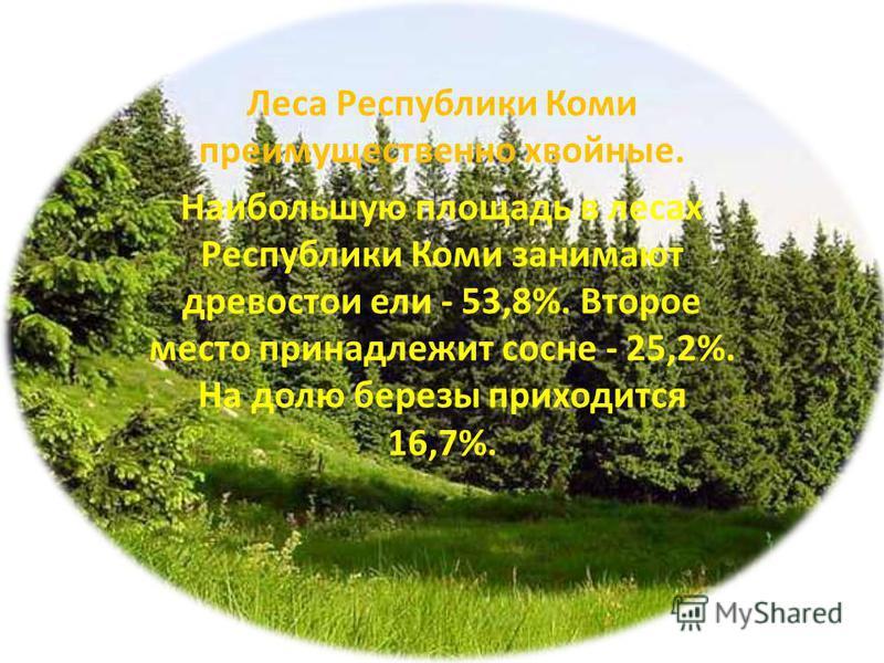 Леса Республики Коми преимущественно хвойные. Наибольшую площадь в лесах Республики Коми занимают древостои ели - 53,8%. Второе место принадлежит сосне - 25,2%. На долю березы приходится 16,7%.