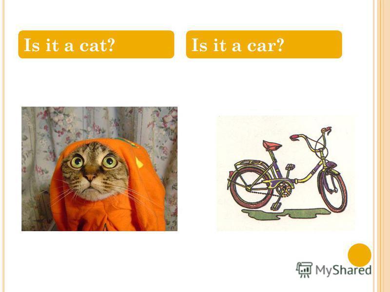 Is it a cat?Is it a car?
