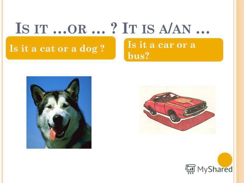 I S IT … OR … ? I T IS A / AN … Is it a cat or a dog ? Is it a car or a bus?