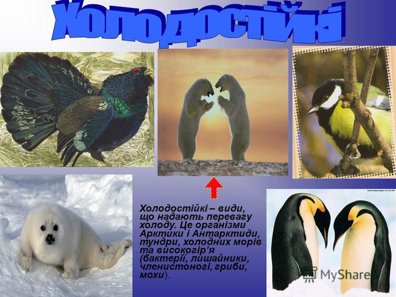 Холодостійкі – види, що надають перевагу холоду. Це організми Арктики і Антарктиди, тундри, холодних морів та високогіря (бактерії, лишайники, членистоногі, гриби, мохи).