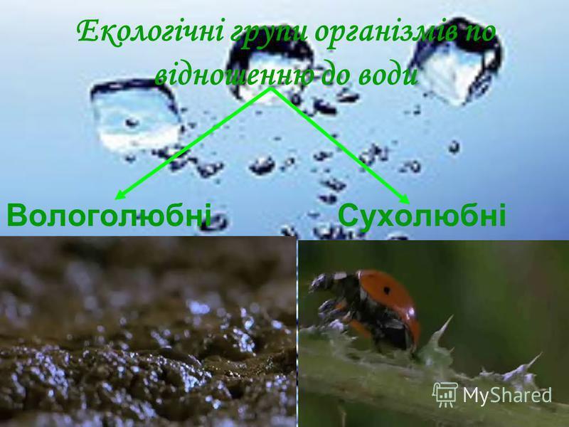 Екологічні групи організмів по відношенню до води Вологолюбні Сухолюбні
