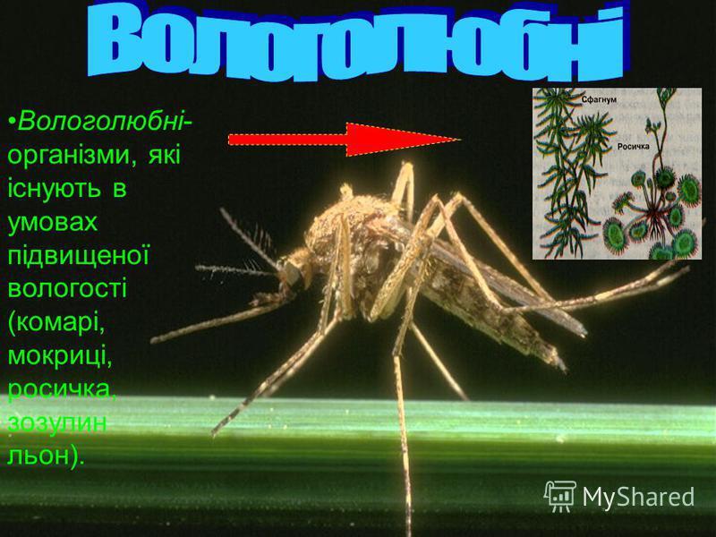 Вологолюбні- організми, які існують в умовах підвищеної вологості (комарі, мокриці, росичка, зозулин льон).