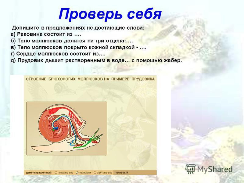Проверь себя Допишите в предложениях не достающие слова: а) Раковина состоит из …. б) Тело моллюсков делятся на три отдела:…. в) Тело моллюсков покрыто кожной складкой - …. г) Сердце моллюсков состоит из…. д) Прудовик дышит растворенным в воде… с пом