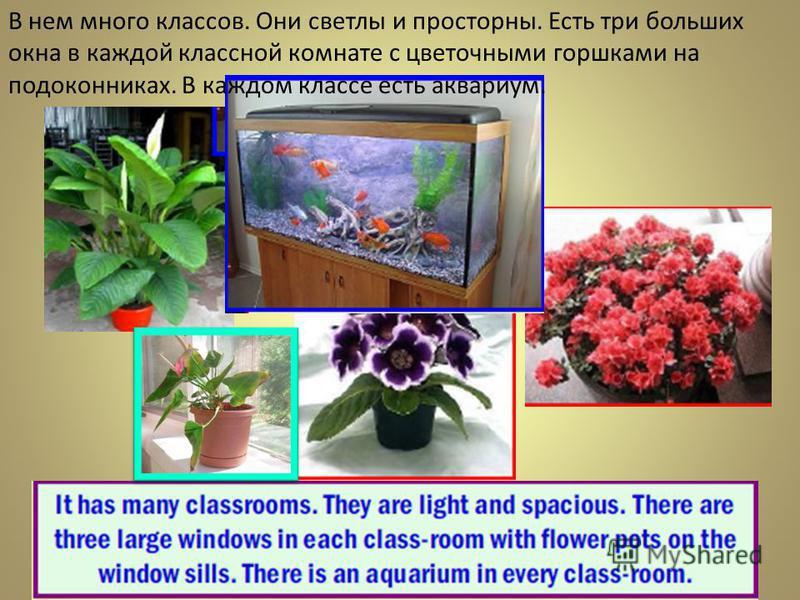 В нем много классов. Они светлы и просторны. Есть три больших окна в каждой классной комнате с цветочными горшками на подоконниках. В каждом классе есть аквариум.