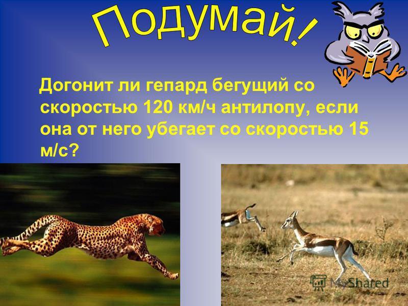 Догонит ли гепард бегущий со скоростью 120 км/ч антилопу, если она от него убегает со скоростью 15 м/с?