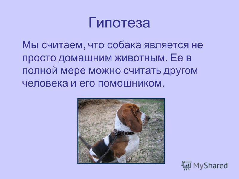 Гипотеза Мы считаем, что собака является не просто домашним животным. Ее в полной мере можно считать другом человека и его помощником.