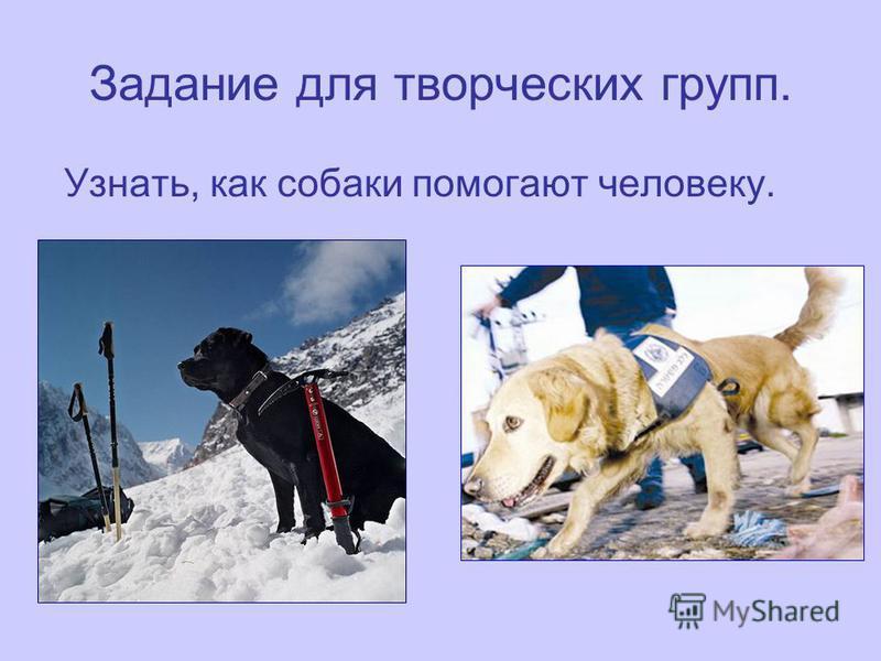 Задание для творческих групп. Узнать, как собаки помогают человеку.