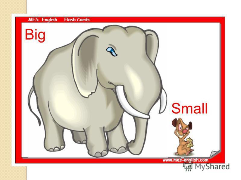 Big Small