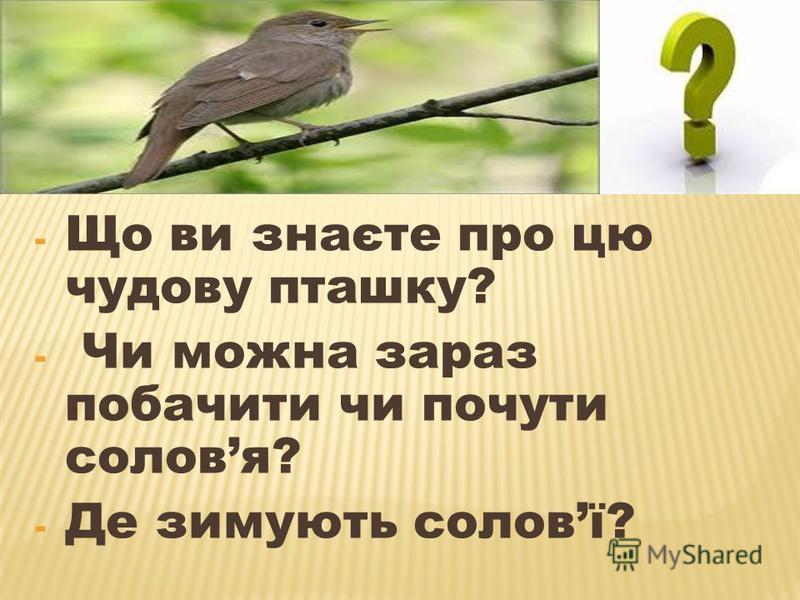 - Що ви знаєте про цю чудову пташку? - Чи можна зараз побачити чи почути соловя? - Де зимують соловї?