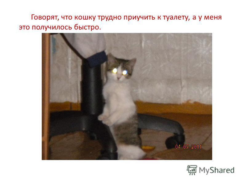 Говорят, что кошку трудно приучить к туалету, а у меня это получилось быстро.