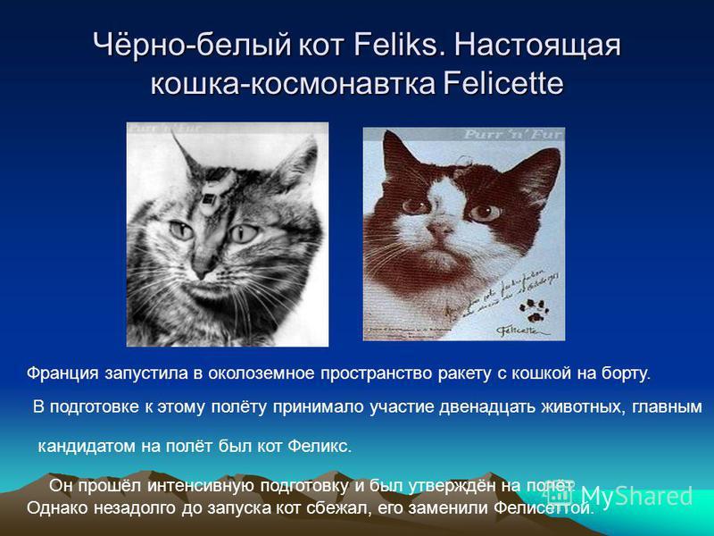Чёрно-белый кот Feliks. Настоящая кошка-космонавтка Feliсette Франция запустила в околоземное пространство ракету с кошкой на борту. В подготовке к этому полёту принимало участие двенадцать животных, главным кандидатом на полёт был кот Феликс. Он про